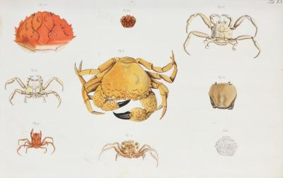 Johann Friederich Wilhelm Herbst Herbst A Group of Six Crustaceans Crabs