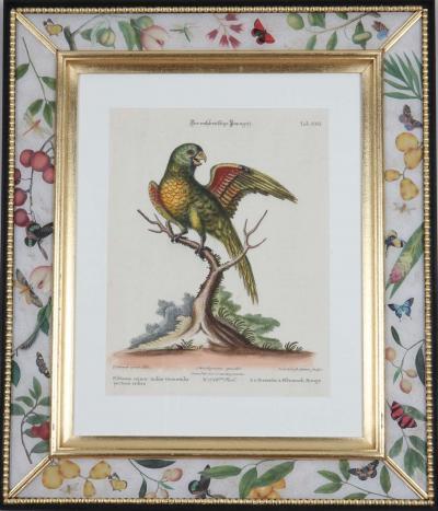 Johann Michael Seligmann Johann Seligmann Engravings of parrots after George Edwards 1770
