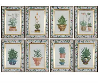 Johann Wilhelm Weinmann Johann Weinmann 18th century engravings of plants in pots