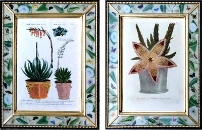 Johann Wilhelm Weinmann Johann Weinmann Pair of Botanical Engravings with Plants in Pots