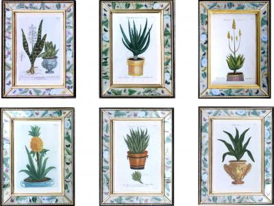 Johann Wilhelm Weinmann Johann Weinmann Set of Six Botanical Engravings with Plants in Pots