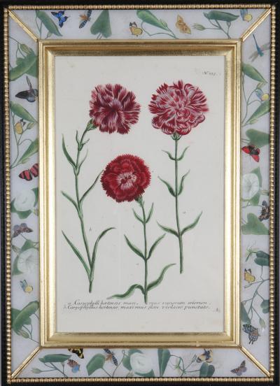 Johann Wilhelm Weinmann Johann Weinmann c 18th botanical engravings in decalcomania frames