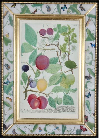Johann Wilhelm Weinmann Johann Weinmann c 18th engravings of fruit in decalcomania frames