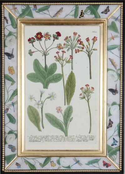 Johann Wilhelm Weinmann Johann Weinmann c18th botanical engravings in decalcomania frames