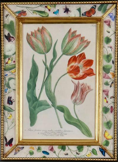 Johann Wilhelm Weinmann Johann Weinmann c18th engravings of tulips in decalcomania frames