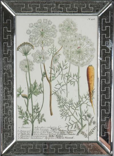 Johann Wilhelm Weinmann Johann Weinmann c18th engravings of vegetables in mirror frames
