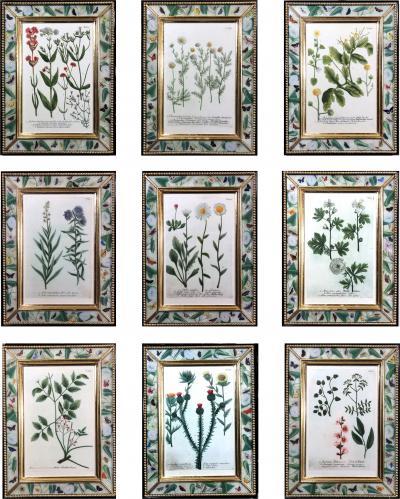 Johann Wilhelm Weinmann Johann Wilhelm Weinmann Botanical Engravings of Flowers Set of Nine