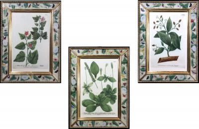 Johann Wilhelm Weinmann Johann Wilhelm Weinmann Botanical Engravings of Flowers Set of Three