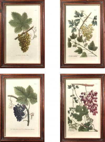 Johann Wilhelm Weinmann Johann Wilhelm Weinmann Engravings of Grapes Set of Four