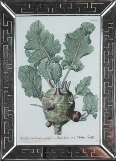 Johann Wilhelm Weinmann Johannes Weinmann A Group of Engravings of Vegetables