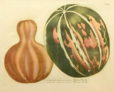 Johann Wilhelm Weinmann Set of Four Gourds
