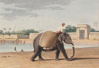 John Gantz An Elephant by the River Madras