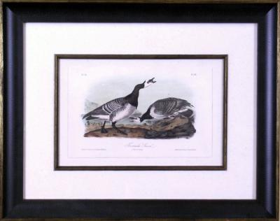 John James Audubon John James Audubon Bernacle Goose 1856