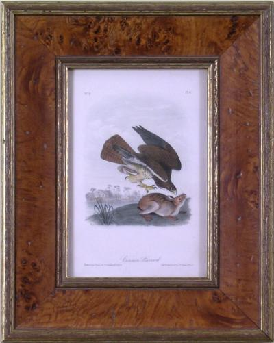 John James Audubon John James Audubon Common Buzzard 1839
