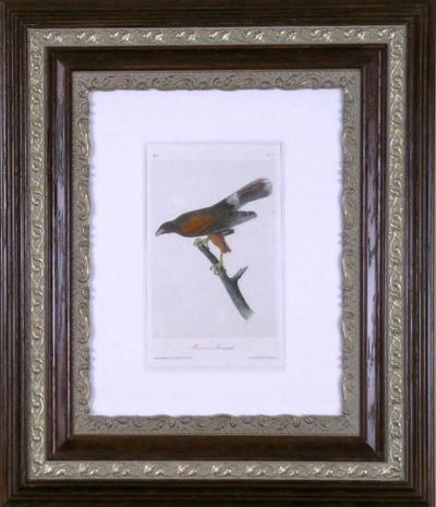 John James Audubon John James Audubon Harriss Buzzard 1856