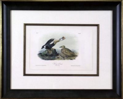 John James Audubon John James Audubon King Duck 1856