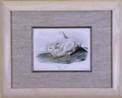 John James Audubon John James Audubon Northern Hare 1849
