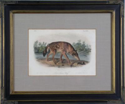 John James Audubon John James Audubon Red Texas Wolf Audubon Animal 1854