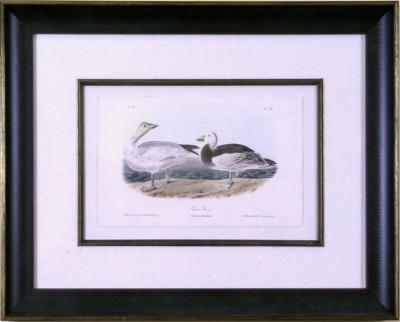 John James Audubon John James Audubon Snow Goose 1856