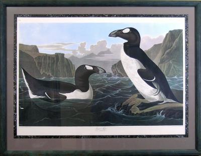 John James Audubon John James Audubon The Great Auk 1971 1973