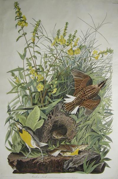 John James Audubon Pl 136 Meadowlark