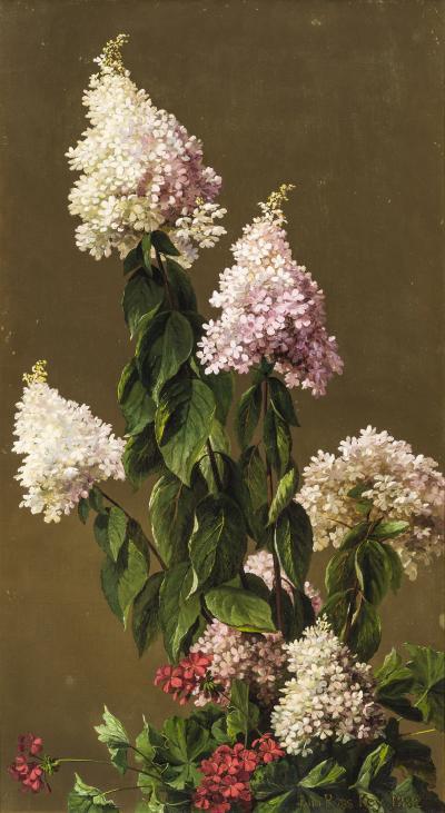 John Ross Key Hydrangeas and Other Garden Flowers