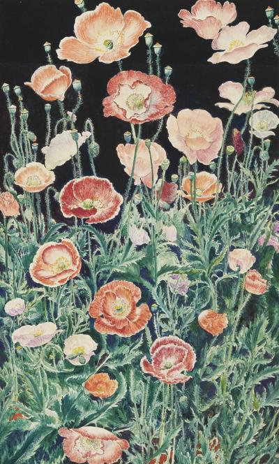 John Rutherford Boyd Shirley Poppies