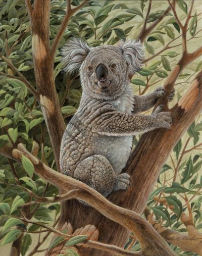 John Ruthven Koala Bear Austrailia