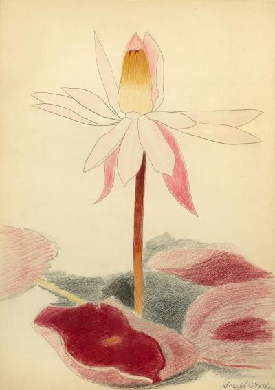 Joseph Stella Water Lily Blossom