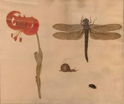 Karl Wilhelm de Hamilton Still Life Dragonfly and Primrose