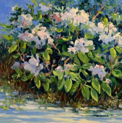 Keith Oehmig Rhododendron
