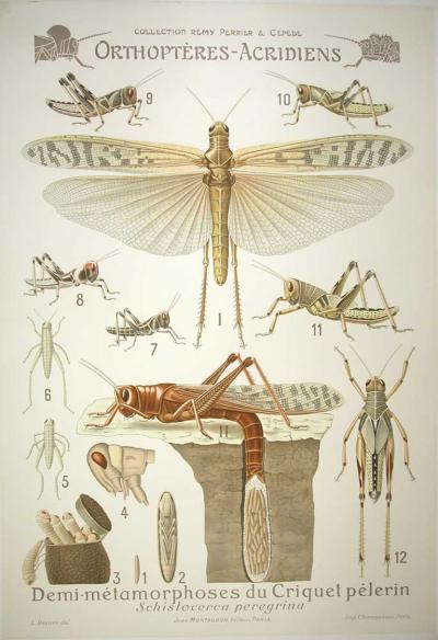 L Devove French Biological Teaching Chart from the Perrier and Cepede Series 1905