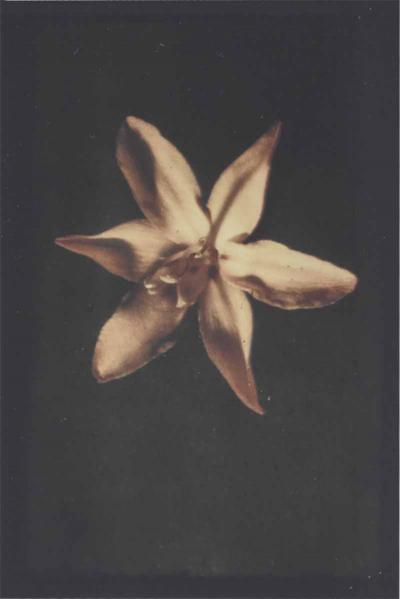 Leendert Blok 1920s botanic autochrome by Dutch photographer Leendert Blok