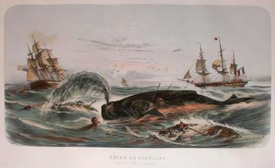 Marine Prints