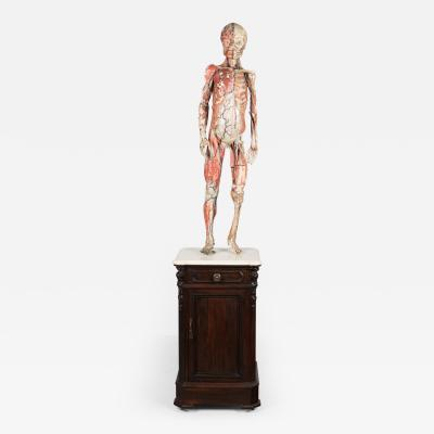 Louis Thomas J r me Auzoux 19th C French Anatomical Model By Dr Auzoux