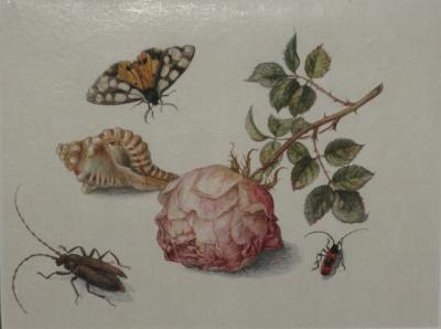 Margareta de Heer Still Life with Rose Insects Butterfly and Conch Shell