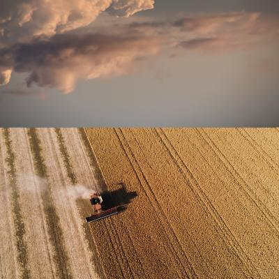 Mark Bartkiw Harvest