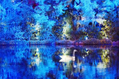 Mitchell Funk Blue Duck
