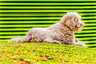 Mitchell Funk Green Dog