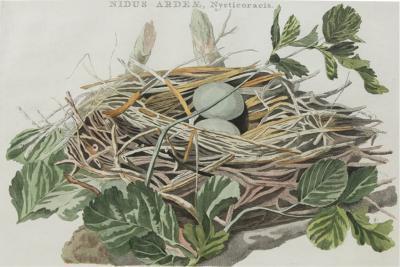 NOZEMAN A Group of Four Birds Nests