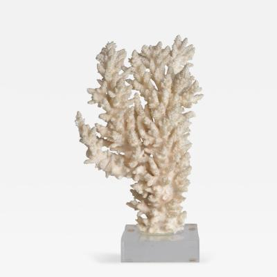 Natural Coral Sculpture on Lucite Base