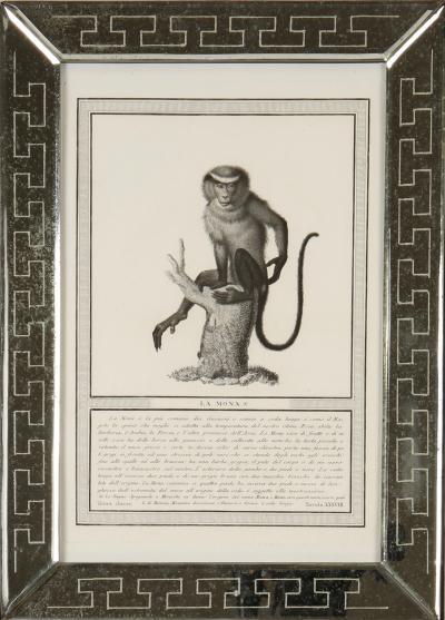 Nicolas Jacob stipple engravings of monkeys c1810