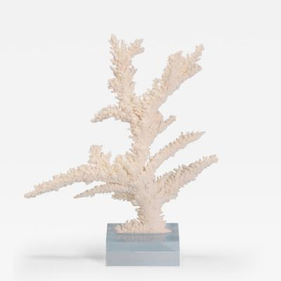 Organic Modern Branch Coral Sculpture on a Lucite Base