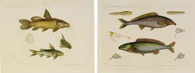 Pair of Framed Zoological Prints Fish of the Nile