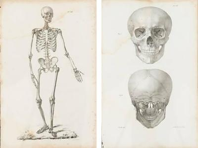 Pair of French anatomical engravings