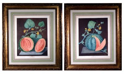Pair of George Brookshaw Engravings of Melons