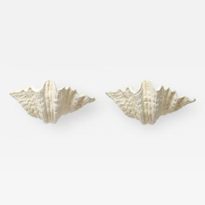 Pair of Plaster Shell Wall Sconces
