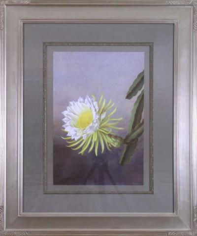 Paul Jones Hylocereus Undatus Night blooming Cereus 1976