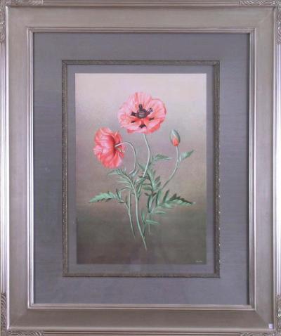 Paul Jones Papaver Orientalis Red Poppy 1976