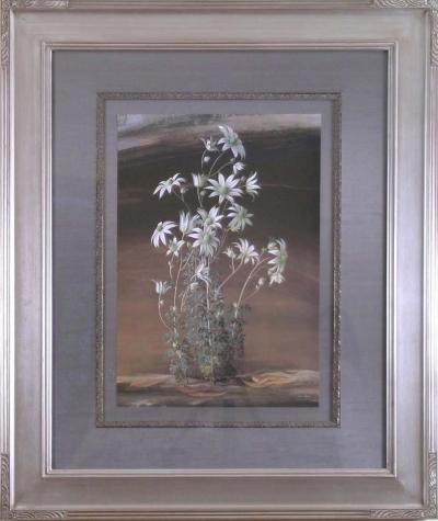 Paul Jones Paul Jones b 1921 Actinotus Helianthii Flannel Flower Australia 1971